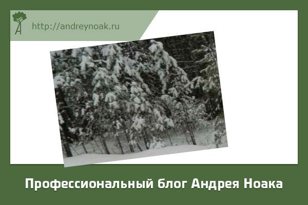 Что происхдит с деревьями зимой