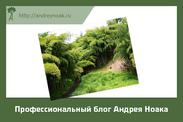 Как растет бамбук в джунглях