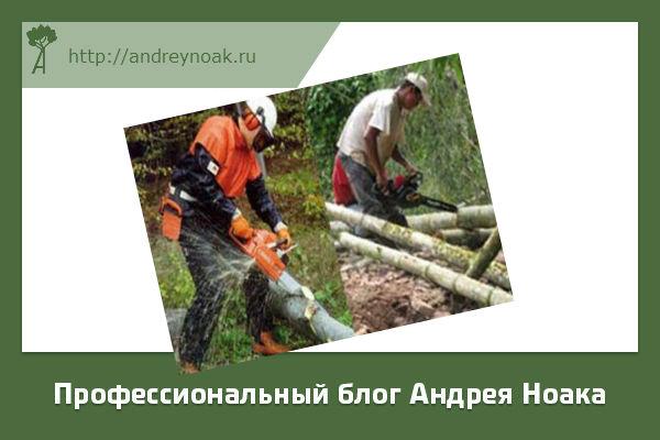 Заготовка бамбука и древесины