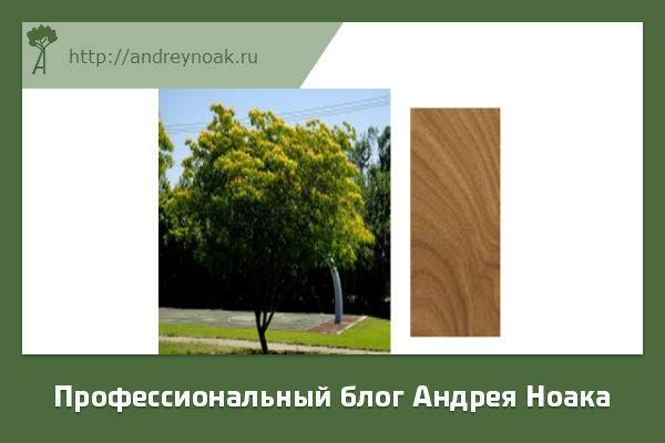 Аргентинское железное дерево