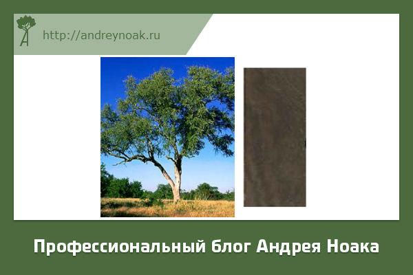 Свинцовое дерево