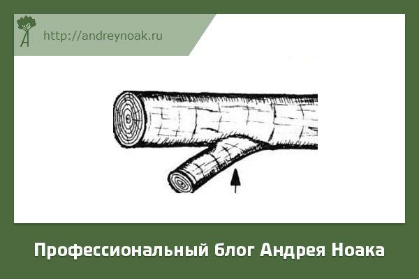 Вырезка дефектов при производстве шпона