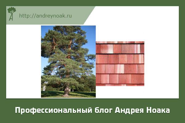 Черепица из красного дерева