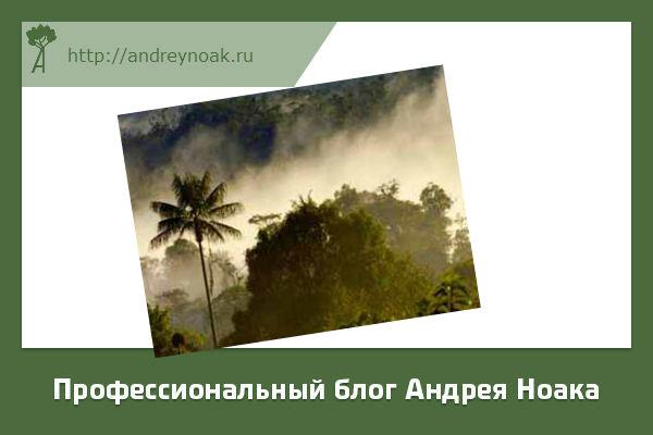Доисторические леса