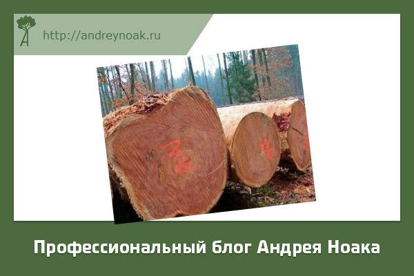 Толстый лес