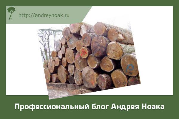 Лес для изготовления шпона
