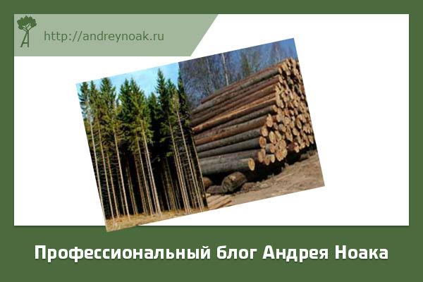Как определить качество леса?